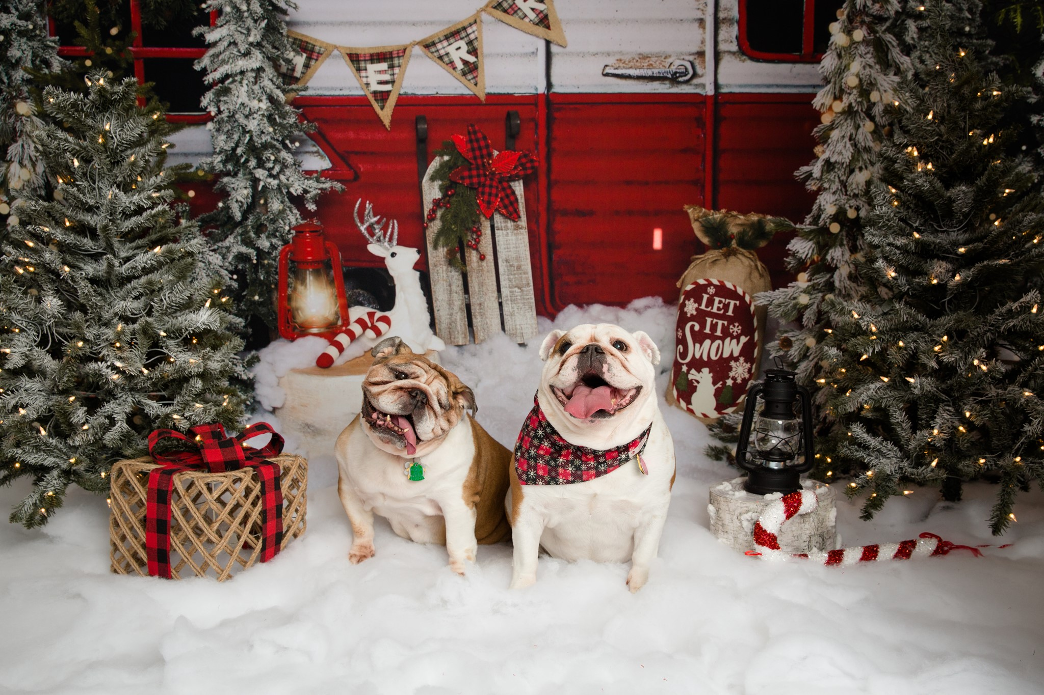 Santa/Holiday Photo Fundraiser Benefitting Bulldog Rescue